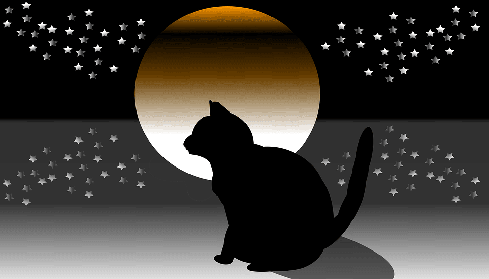 daily distress cat horoscopes with mystic mog